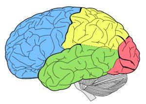 sordità e cervello